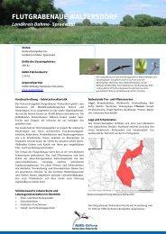 Flutgrabenaue Waltersdorf - NABU-Stiftung Nationales Naturerbe