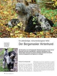 Der Bergamasker Hirtenhund - Schweizer Hunde Magazin