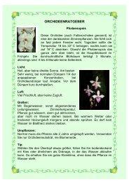 Ratgeber für Phalaenopsis