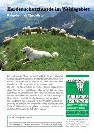 Herdenschutzhunde im Weidegebiet - Schweizer Wanderwege