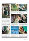 Download - Interessengemeinschaft Effektive Mikroorganismen ... - Seite 3