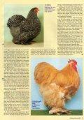Die Farbschläge der Cochin NEU - Brahmazucht.eu - Page 2
