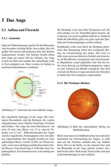 5 Das Auge
