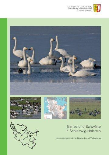 Gänse und Schwäne in Schleswig-Holstein - Landesamt für ...