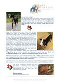GGm Newsletter4 Dezember 2012 - Galgos, Greys and more - Seite 3