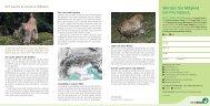 Der Luchs in unseren Wäldern» (pdf) - Pro Natura