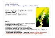Familie: Asparagaceae (früher: Ruscaceae/ Convallariaceae ...