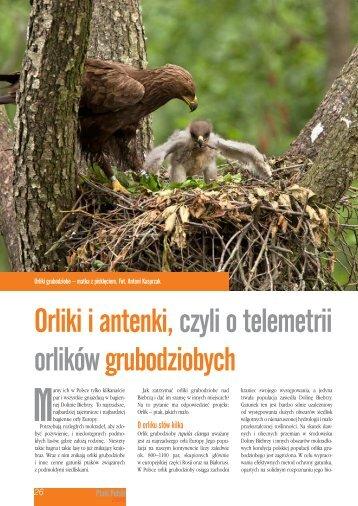 Orliki i antenki,czyli o telemetrii orlików grubodziobych - Orlik - Ptak ...