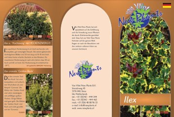 Ilex a. - van Vliet New Plants