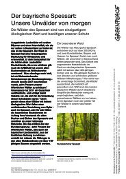 Die Wälder des Spessart | Factsheet - Greenpeace