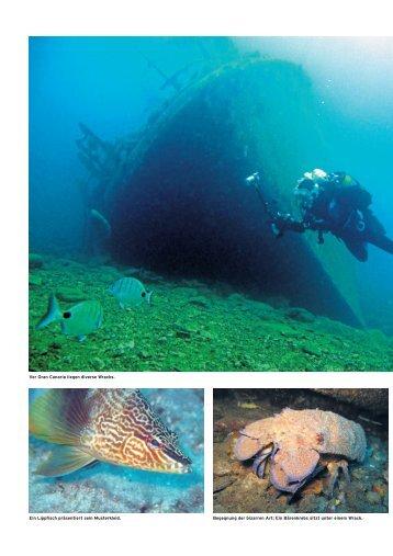 tcs - Extra Divers Gran Canaria
