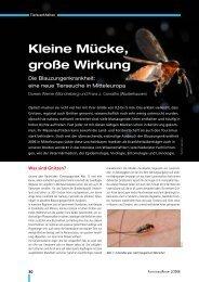 Kleine Mücke, große Wirkung - Niedersachsen