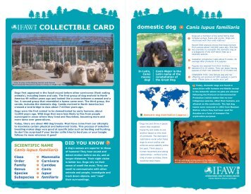 A dog's world - International Fund for Animal Welfare
