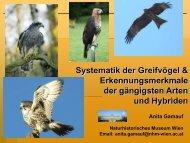Systematik der Greifvögel & Erkennungsmerkmale der gängigsten ...