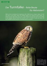 PDF 556 KB - Der Falke