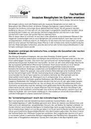 Fachartikel Invasive Neophyten im Garten ersetzen - AGRIDEA Lindau
