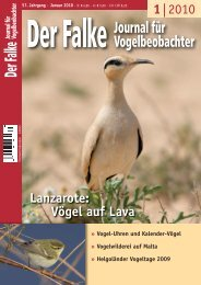 1| 2010 Lanzarote: Vögel auf Lava - Biologie
