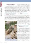 1| 2010 Lanzarote: Vögel auf Lava - Biologie - Seite 4