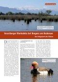 1| 2010 Lanzarote: Vögel auf Lava - Biologie - Seite 7