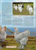 Gigantische Brahmas - Brahmazucht.eu - Page 2