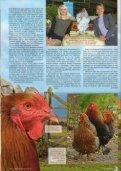Gigantische Brahmas - Brahmazucht.eu - Page 3