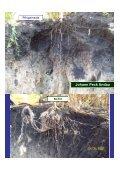 Mulch - Land-Impulse - Seite 5