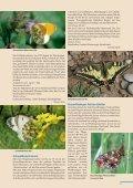 Beilage zum Naturschutzreport 2/2012 - LBV - Page 3