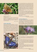 Beilage zum Naturschutzreport 2/2012 - LBV - Page 4
