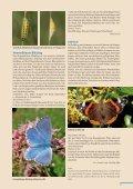 Beilage zum Naturschutzreport 2/2012 - LBV - Page 5