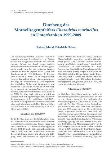 Durchzug des Mornellregenpfeifers Charadrius morinellus - Otus e.V.