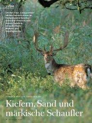Kiefern, Sand und märkische Schaufler - Wild und Hund