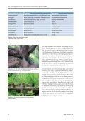 Beiträge zur Europäischen Lärche - Bayerische Landesanstalt für ... - Seite 7