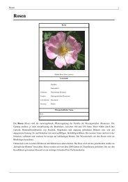 Rosen - Blumen Peters Bremerhaven