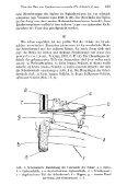 Uber den Bau von Speetoniceras versicolor (TRAUTSCHOLD) aus ... - Page 3