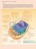 Campbell Biologie für die gymnasiale Oberstufe  - Page 5