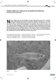 AUF AUF 2007 Heft 4 Ukelei im Bodensee-Obersee.pdf - LAZBW