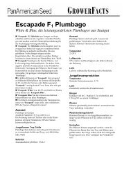Plumbago Escapade - Deutsch