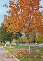 September - Oktober 2010 Es gibt keinen Neuschnee/Nebenarbeit ...