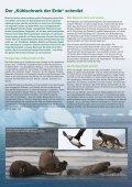 Factsheet: Arktis in Gefahr - Greenpeace - Seite 2