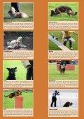Warum nicht Hundesport? - SKG - Seite 2