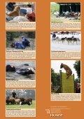 Warum nicht Hundesport? - SKG - Seite 3