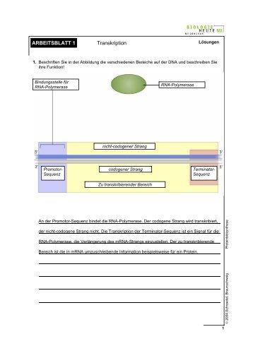 Arbeitsblatt 3 - Lösungen: Muskeln kontrahieren