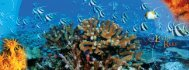 Living Reef - The Nature Conservancy