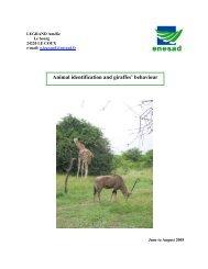 Animal identification and giraffes' behaviour - Haller