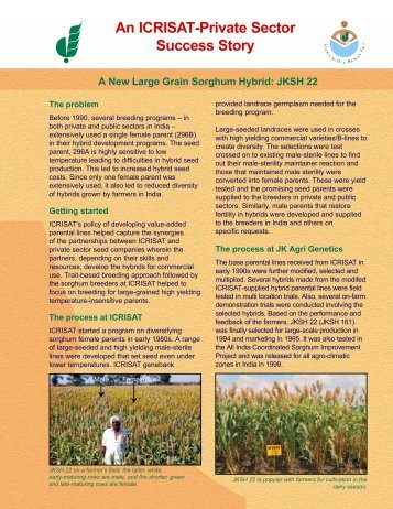 A New Large Grain Sorghum Hybrid - Icrisat