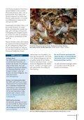 Unsere Ozeane: Geplündert, verschmutzt und ... - IKZM-D Lernen - Seite 7