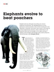 Elephants evolve to beat poachers - India Environment Portal