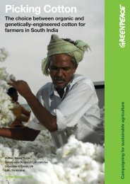 Picking Cotton - Greenpeace