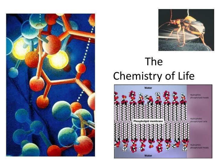 chemistry of life Dougherty's home biology: course content & syllabus biology: chapter 3 the chemistry of life - the identification of biological compounds.