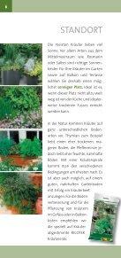 Kräuter - Roth Pflanzen AG - Seite 6
